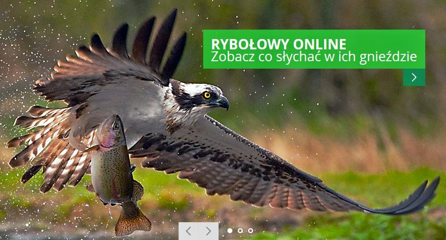 http://www.lasy.gov.pl/informacje/kampanie_i_akcje/rybolow