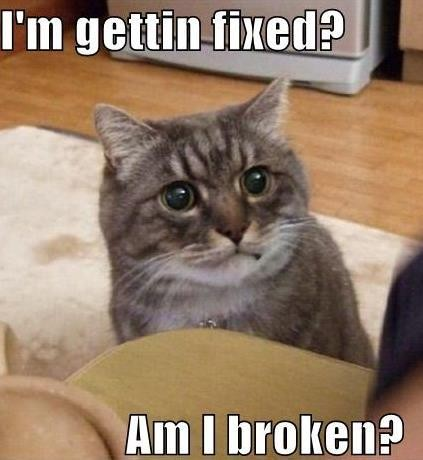 Funny Kittens Memes 30 funny animal captio...