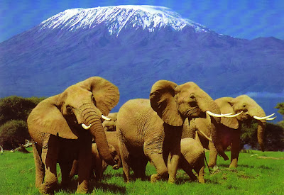 Barack Obama safari, Obama trail in Kenya, Obama heritage, Kogelo, Holiday in Kenya, Safari in Kenya, African wild, Mount Kenya, The Great Rift Valley, Amboseli National Park, Masai Mara Game Reser, Obama trail,
