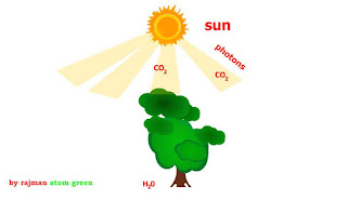 Animation of Photosynthesis