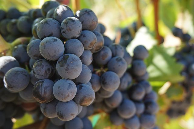 Üzüm üzüme baka baka kararır. 1