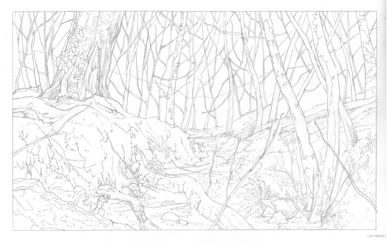 Line Art Forest : Doodles scribbles may