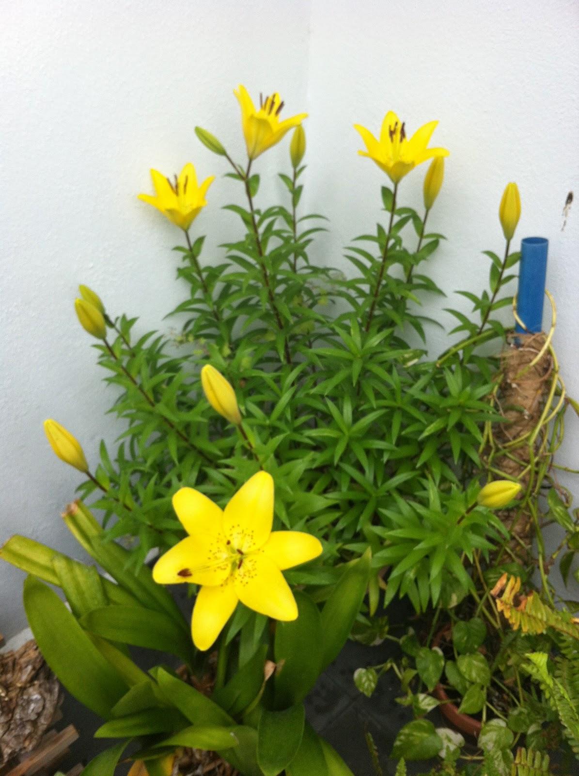 Un blog sobre mi interes por las plantas - Plantas de sol directo para jardin ...
