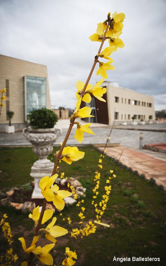 Albacete 365 jard n bot nico avenida de la mancha for Jardin botanico castilla la mancha