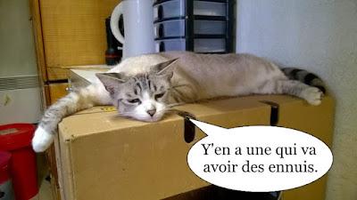 Jolie chatte blanche affalée sur un carton.