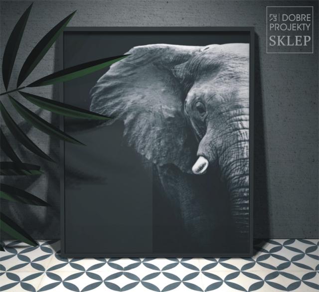 http://www.dobreprojekty-sklep.com/artprinty/123-plakat-slon-czarne-tlo.html