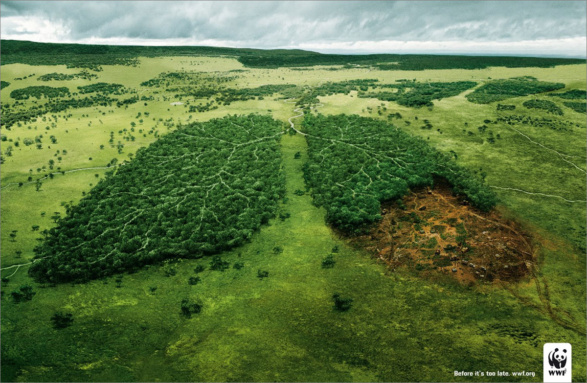 WWF, Before it's too late