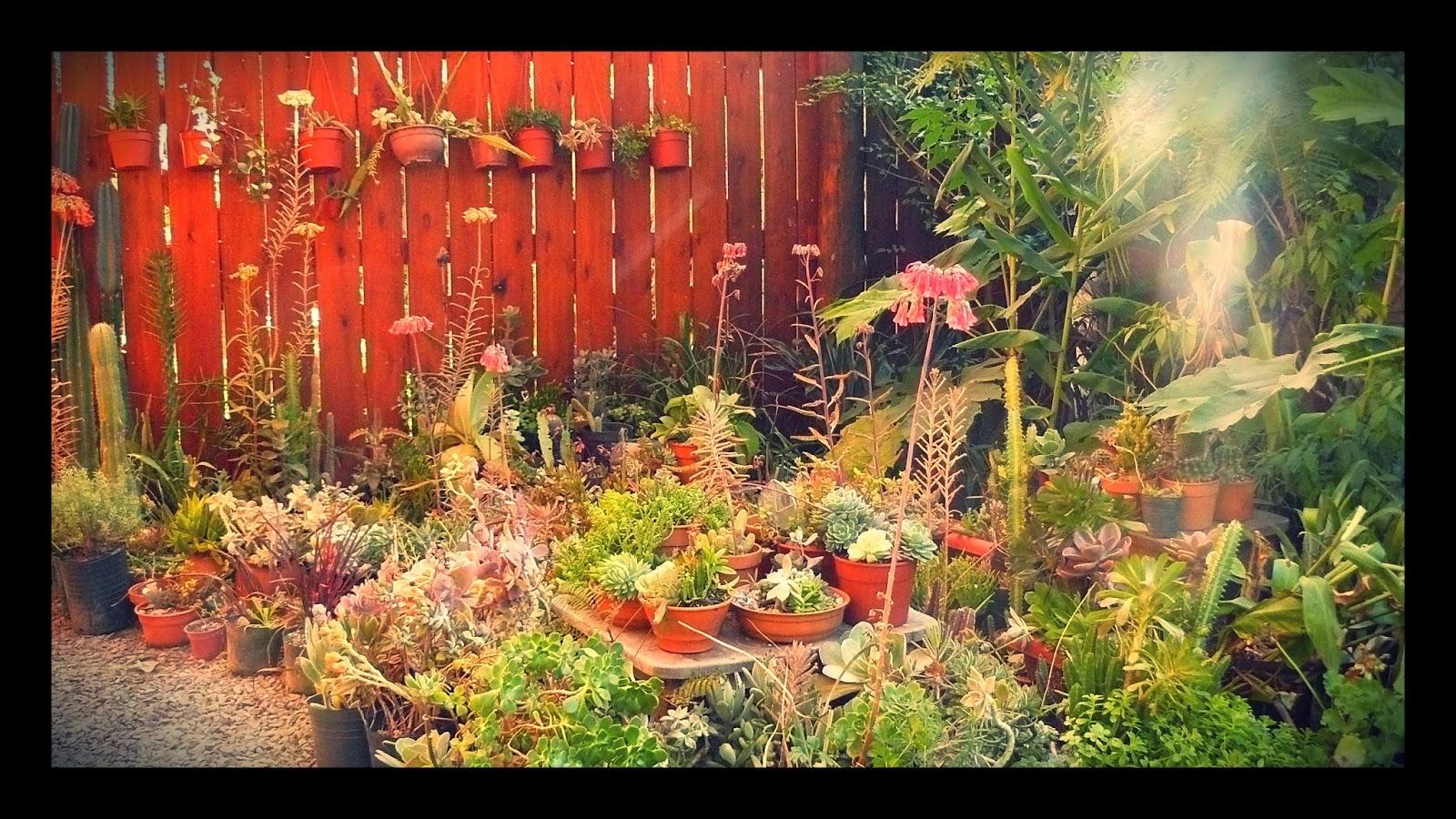 Jardines de cactus y suculentas - Jardines de cactus y suculentas ...