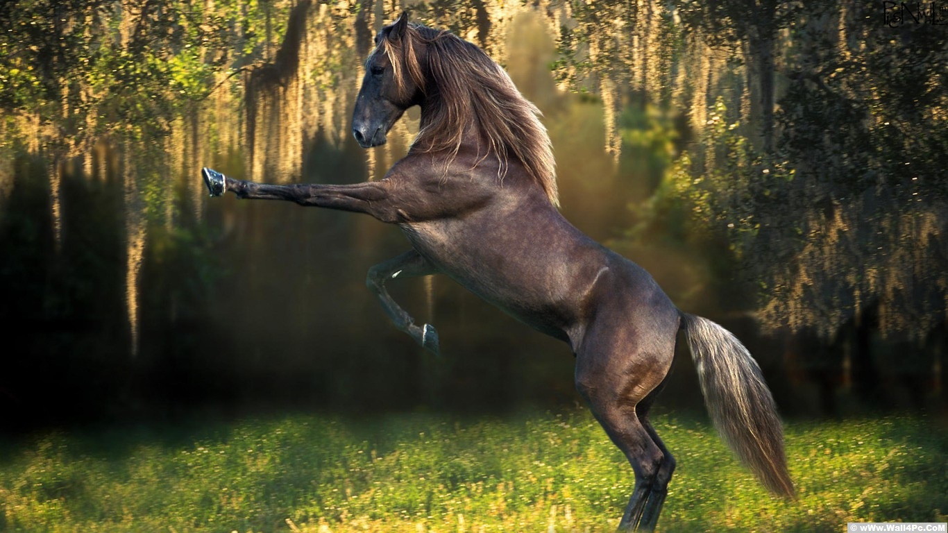 Wall4pc unlimited hd wallpapers horses top class horses hd wallpapers for riders 1366x768 thecheapjerseys Choice Image