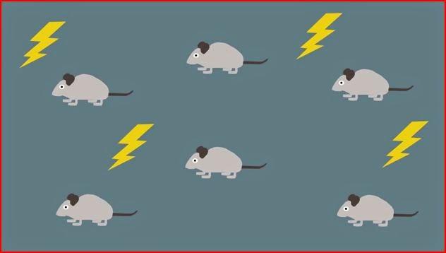 Neurogenesis animatedfilmreviews.filminspector.com