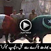 Pakistan Vs India World Cup 2015 Takra Between Bulls
