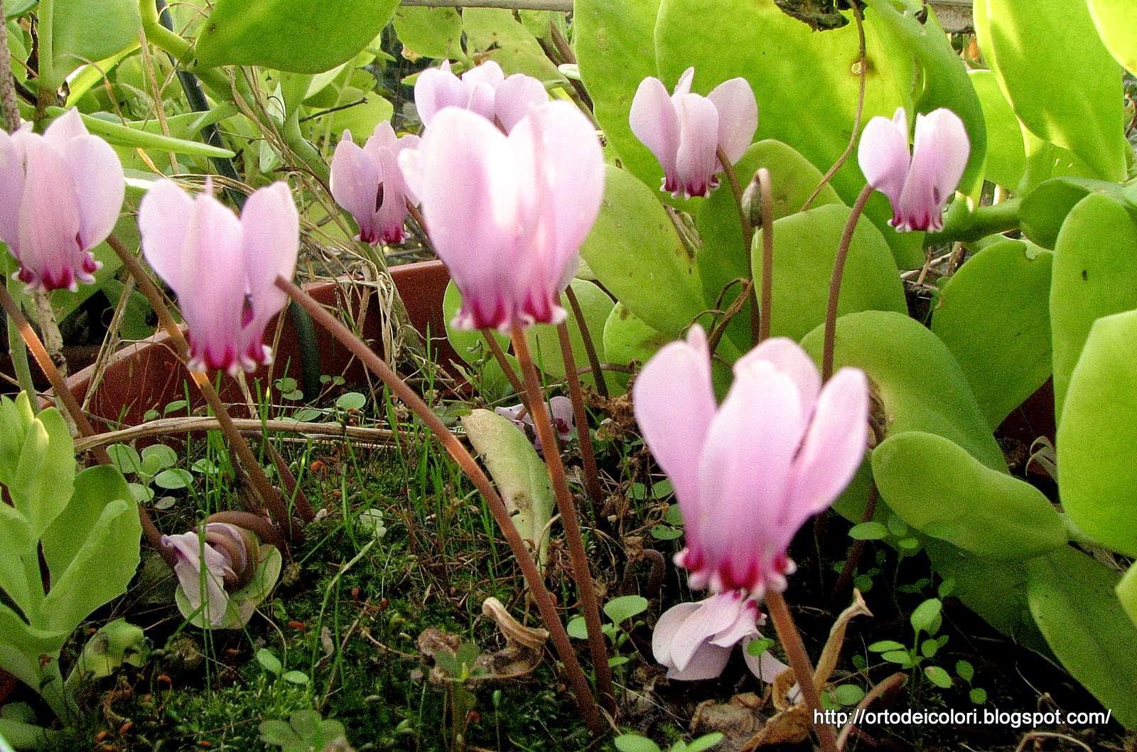 L 39 orto dei colori settembre volge al termine e fioriscono - Bulbi estivi quando piantarli ...