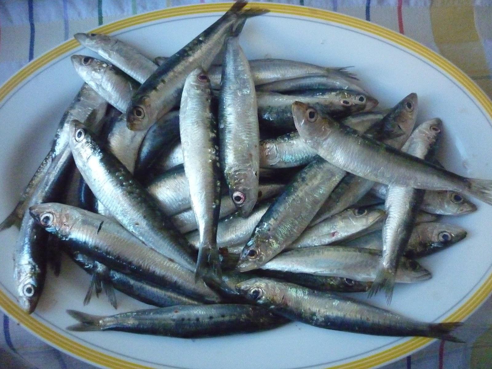 Comprar y cocinar en crisis sardinas parrochas - Como cocinar sardinas ...