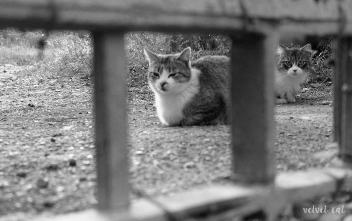 fotografía blanco y negro gatos