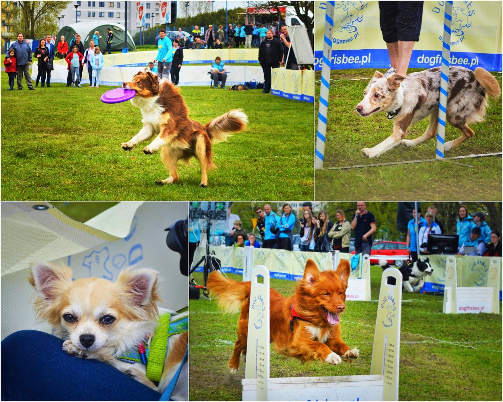 Dog Games Spring Warszawa