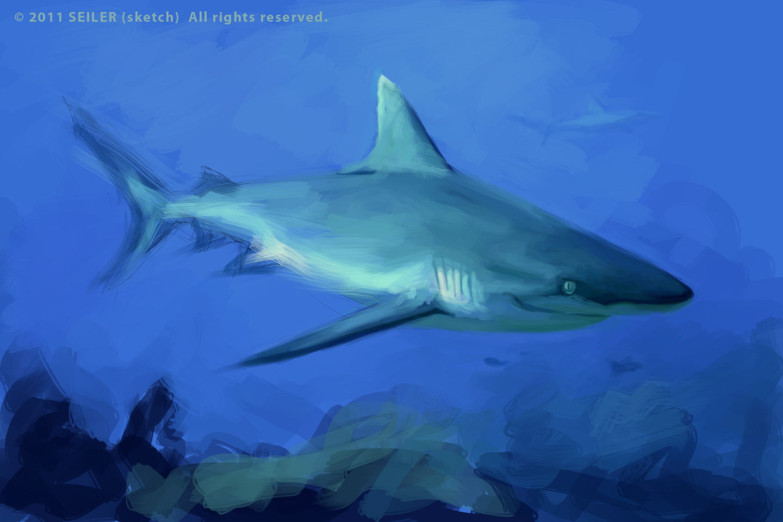 Realistic Shark Drawings Shark sketches.