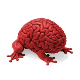 Hibrido cerebro-rana