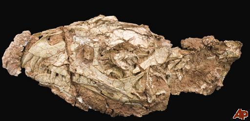 http://1.bp.blogspot.com/-UKBwJwfbMog/TaS_qdLmTEI/AAAAAAAAA_g/6BxMb2mdwcY/s1600/dinosaur-link-2011-4-12-16-0-38.jpg