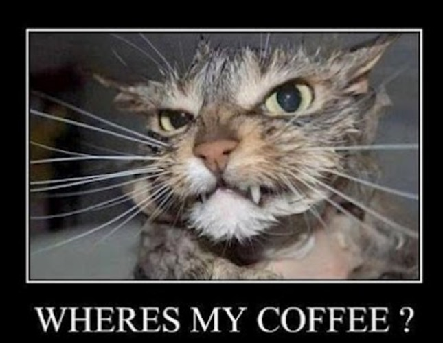 give this cat some coffee quick dennys funny quotes funny monday ...