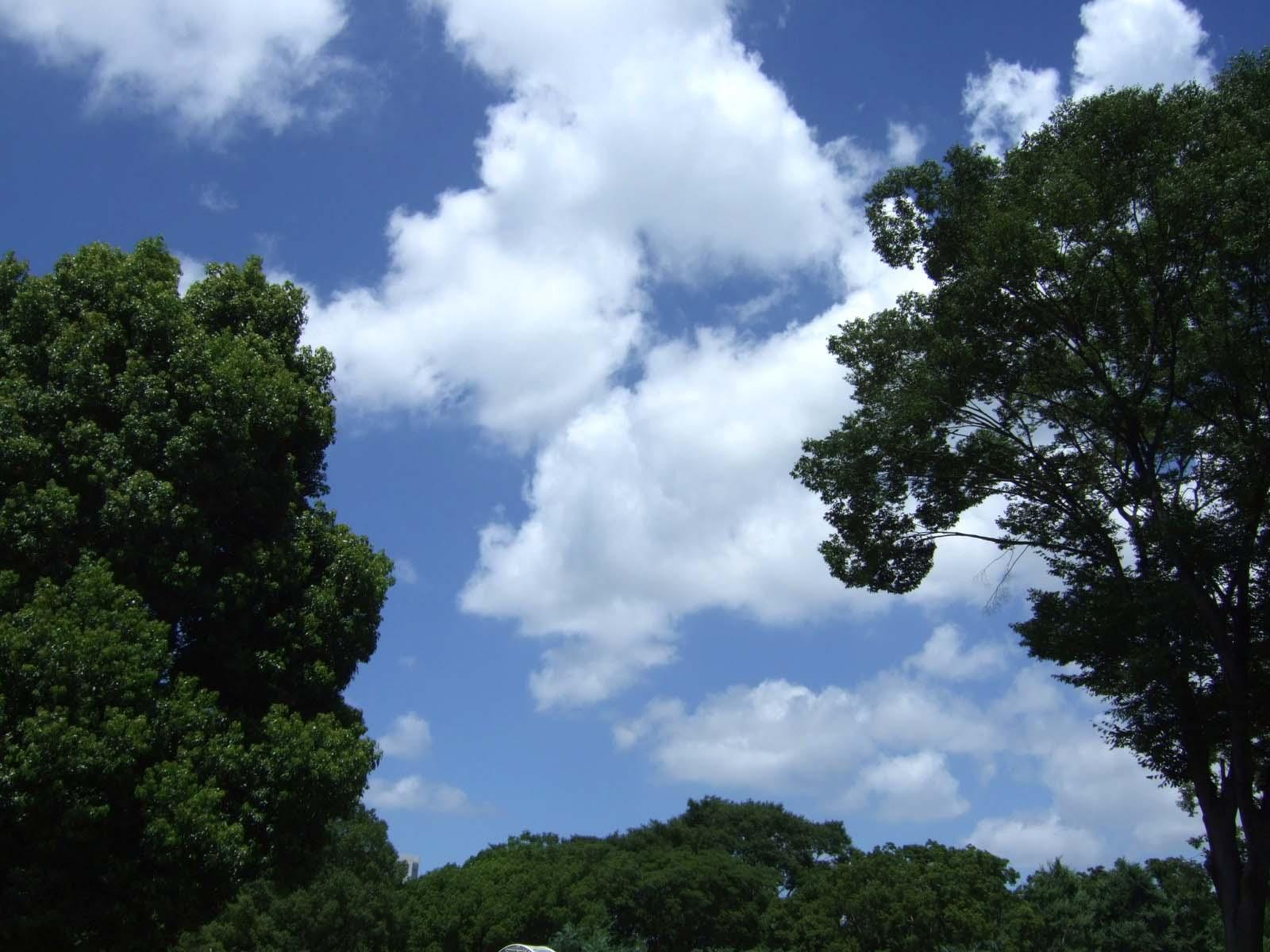 森林,空,雲,代々木公園,盛夏,真夏〈著作権フリー無料画像〉Free Stock Photos