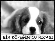 Köpeğin 10 Ricası
