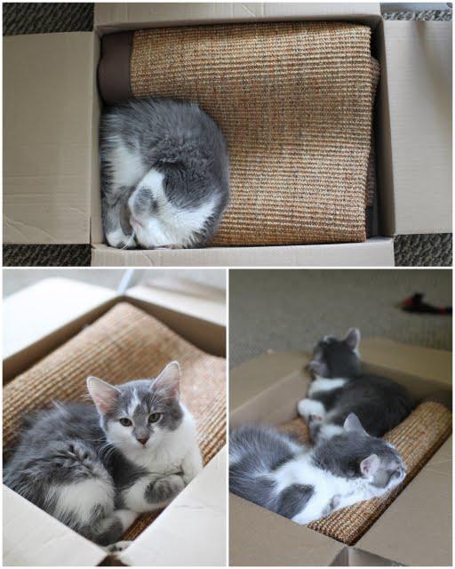 Diy Shelves For Happy Active Kittens Yellow Suitcase Studio