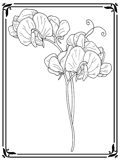 pea plant coloring page