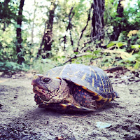 Turtle on a Nature Trail