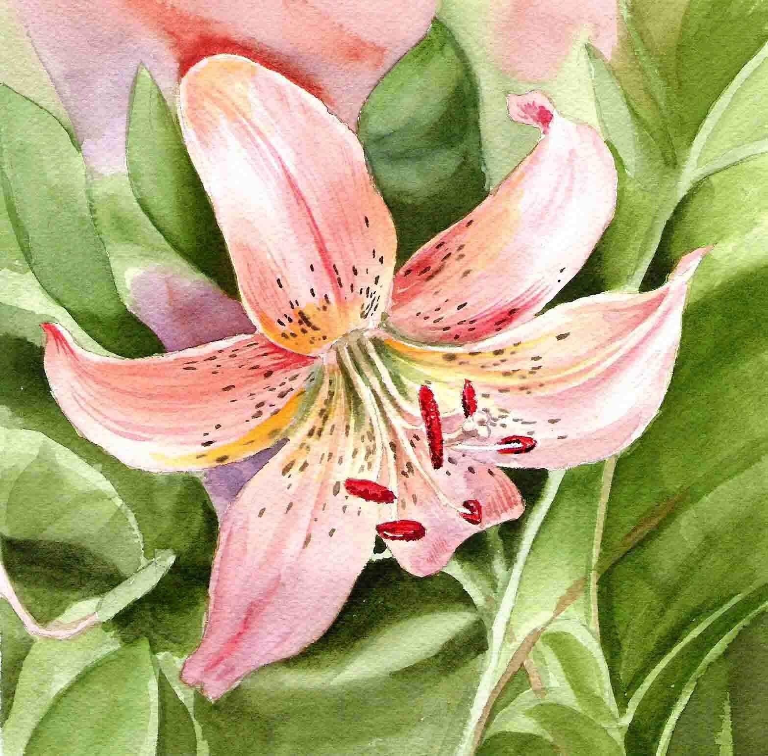 Получить в подарок лилии