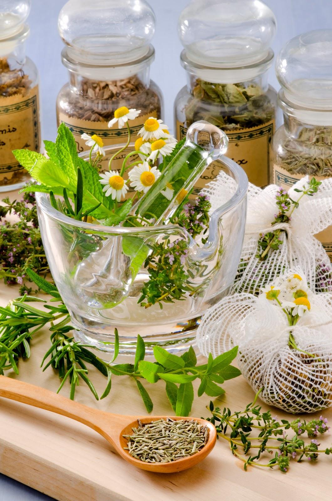 Image result for history of herbal medicine