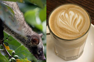 kopi luwak from Bali, healthy coffee, white coffee, drink coffee for health