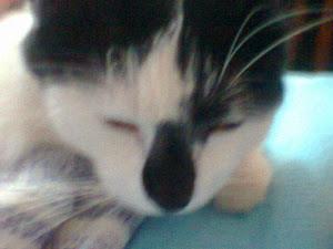 nosso gatinho jullyo