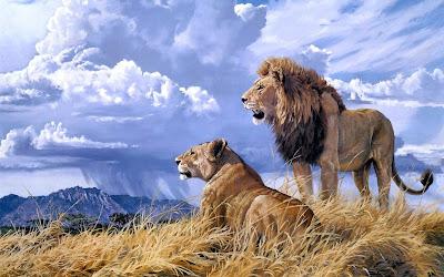 Pintura de leones hembra y macho en la sabana