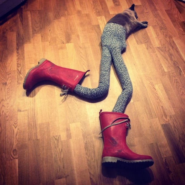 cats wearing tights 4
