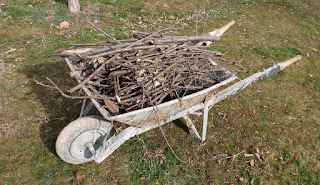 A wheelbarrow full of sticks from the lawn area