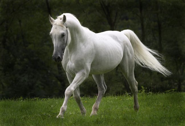 Animals Wallpapers: beautiful horse pictures
