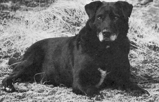 Image result for perro de aguas de san juan