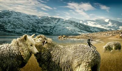 a ovelha e o lobo
