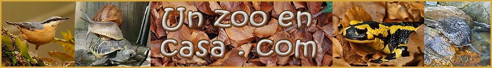 Un zoo en casa - Animales y mascotas