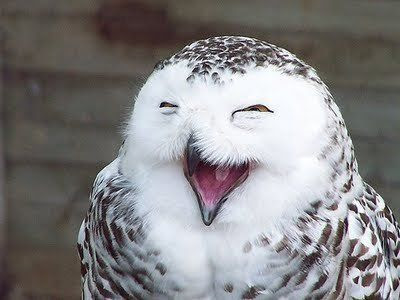 LOL+linda Imagenes chistosas de animales...