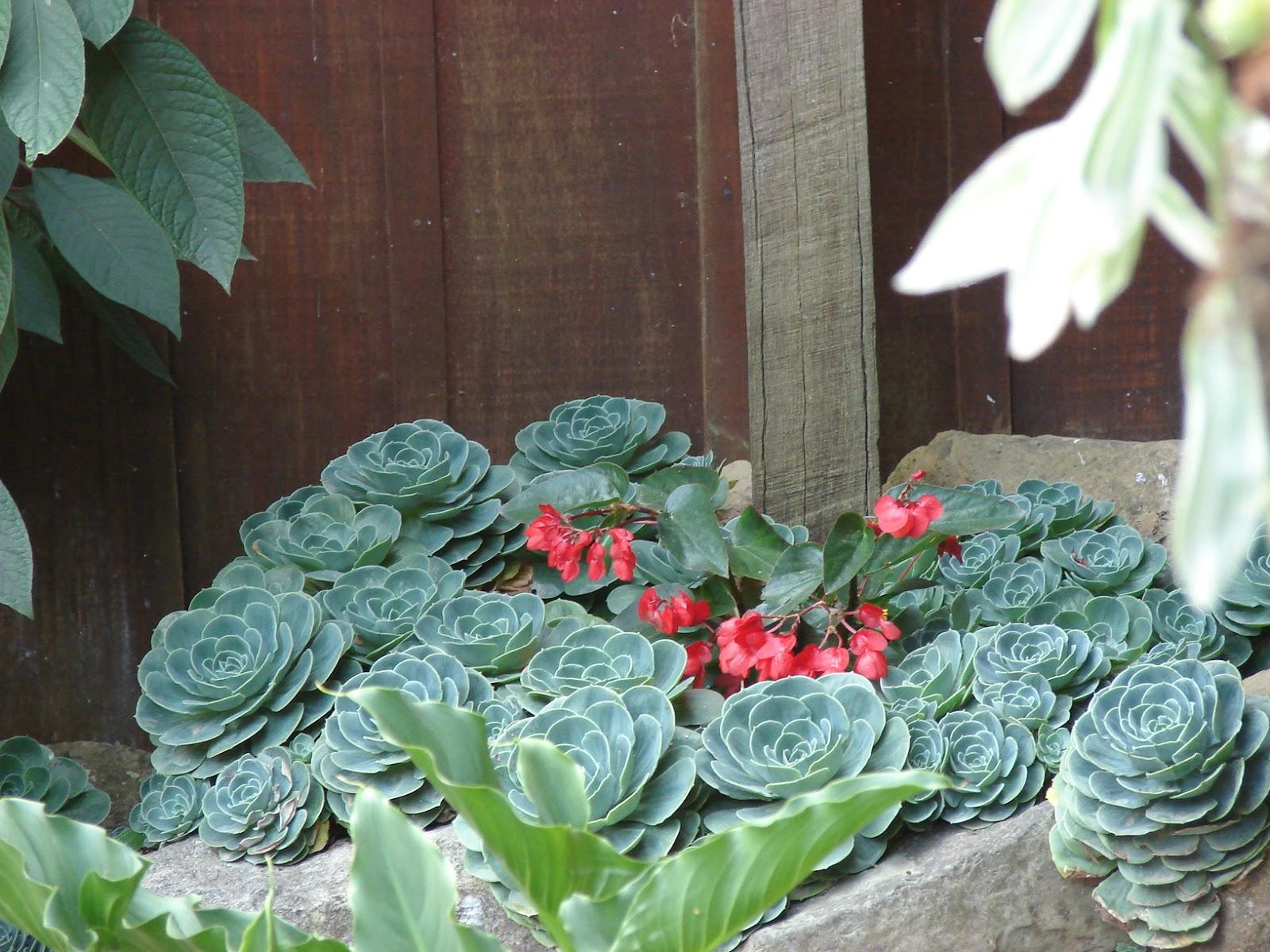 paisajismo pueblos y jardines plantas ornamentales
