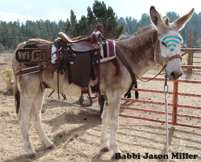 Donkey with WiFi