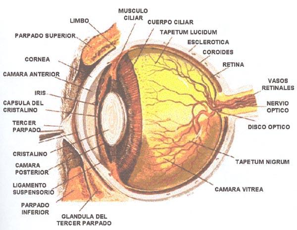 Taller de Color & Composición * 2011 *: Fisiología Ocular y Color