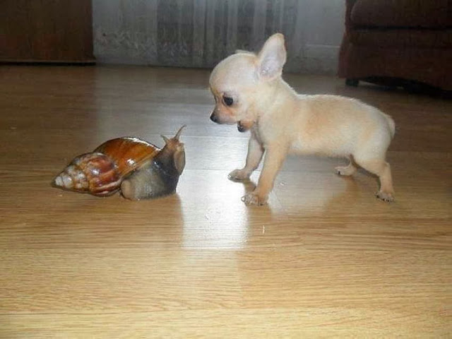 Cute dogs - part 3 (50 pics), little puppy vs giant snail