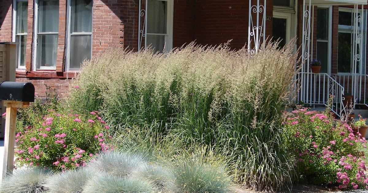 New utah gardener waterwise ornamental grasses for Short grasses for landscaping