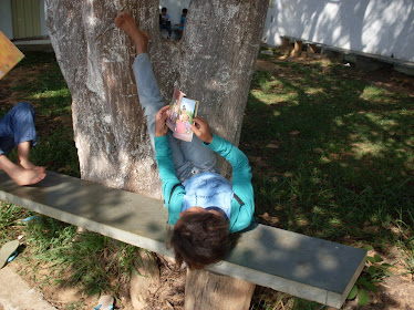 Leitura a sombra das árvores
