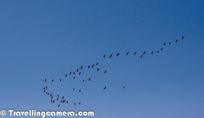 Millions Of Migratory Birds In Pong Wetland Himachal
