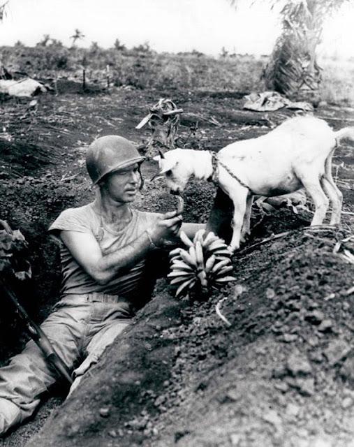Солдат делит банан с козой во время сражения за Сайпан, приблизительно 1944