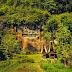 Lemo: Menyambangi Pekuburan di Tebing Batu Khas Toraja