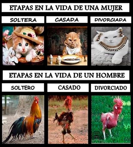Fotos de gatitas y gallos representando etapas la vida con humor.